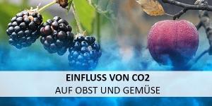 CO2-Detektion: Optimierungspotential im Reifeprozess von Obst und Gemüse durch Kohlendioxidüberwachung