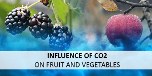 CO2 detection: Enhanced ripening process of fruit and vegetables through carbon dioxide monitoring